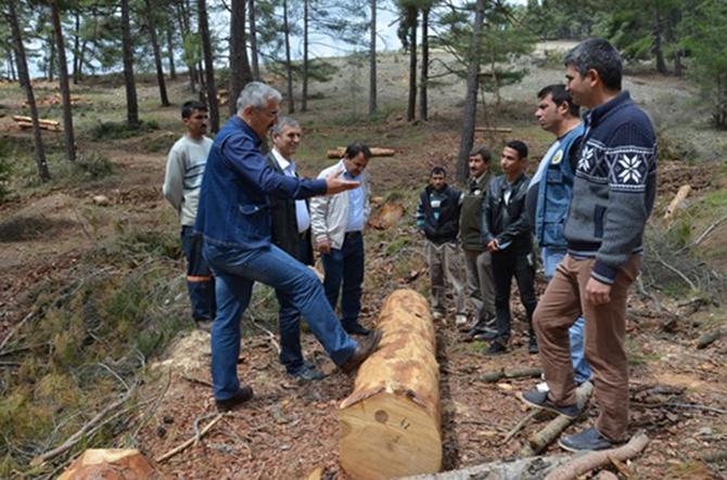 Mersin Orman Bölge Müdürü Yılmaz, Çamalan  Orman İşletme Şefliğinde İncelemelerde Bulundu