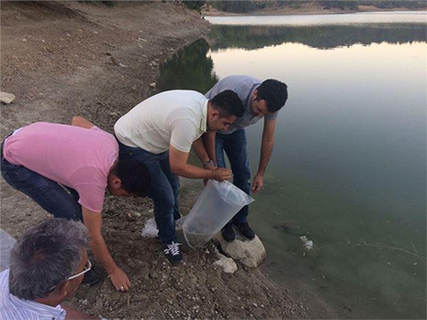 Çavuşlu Göletine 15 Bin Sazan Balığı Yavrusu Bırakıldı