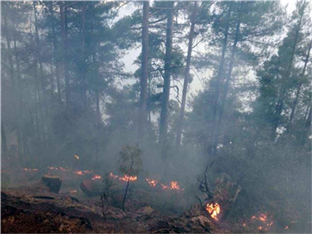 Çamlıyayla'daki Yangında 25 Hektarlık Alan Zarar Gördü