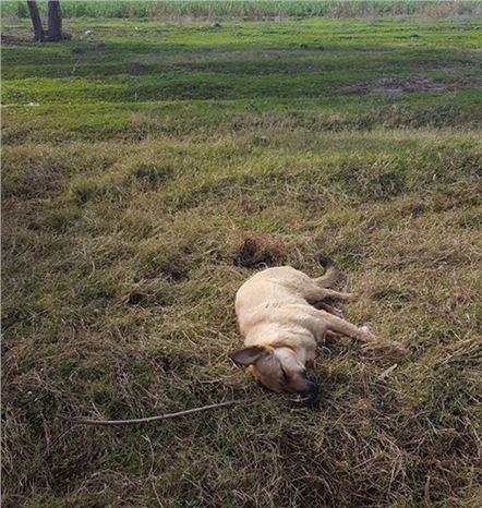 Av Tüfeğiyle Köpek Öldüren Kişiye Bin 255 Lira Para Cezası