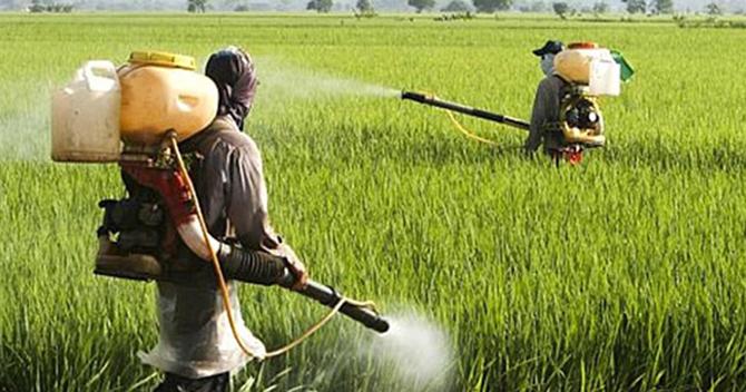Tarlaya Atılan Böcek İlacı Suriyeli Tarım İşçilerini Etkiledi