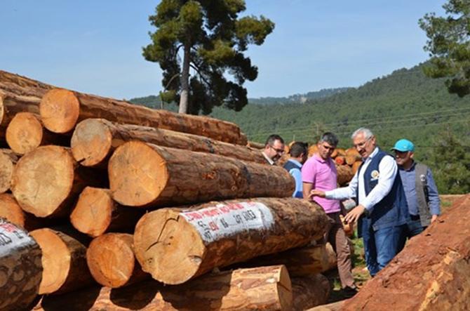 Tarsus Orman Üretim Sahaları İncelendi