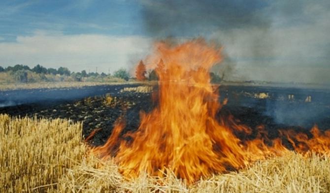Tarlada Çıkan Yangın Korkuttu