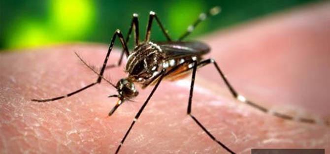 Sivrisinekle Mücadele Olacak mı?