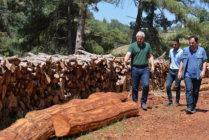 Tarsus Orman Üretim Alanları Ziyaret Edildi