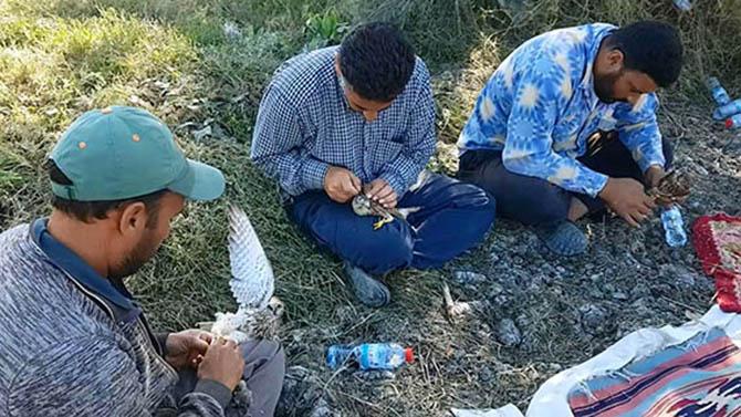 Yasa Dışı Yöntemle Kerkenez Avlayanlara Ceza Yağdı