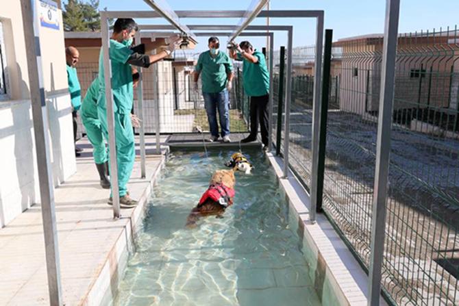 Türkiye'de Bir İlk: Köpekler İçin Fizik Tedavi Merkezi ve Terapi Havuz