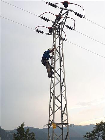 Elektrik Akımından Kaynaklanan Kuş Ölümleri Sona Erecek