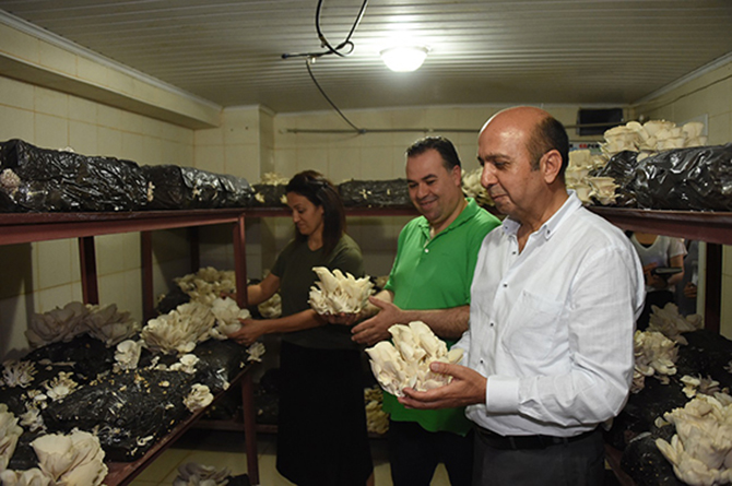 Tarsus Belediyesi'nde İstiridye Mantarının Üretimi Artacak