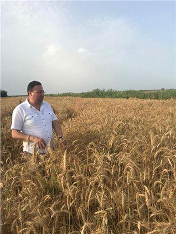 Buğday Hasadı Sürüyor