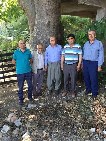 Muhtar, 500 Yaşındaki Çınar Ağacının  Anıt Ağaç Olarak Tescillenmesini İstiyor