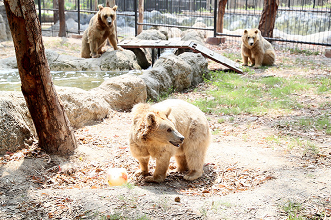 Hayvanları Koruna Günü'nde, Hayvan Parkı'na Girişler Ücretsiz