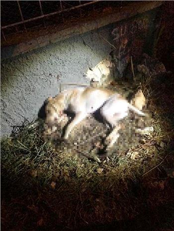 Köpeği Tüfekle Vurarak Öldürdüler