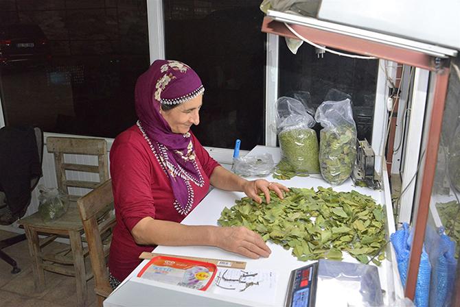 Türkiye'nin 3. Büyük Defne Yaprağı İşleme Tesisi Tarsus'ta