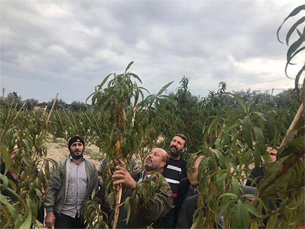 """Çiftçilere """"Sert Çekirdekli Meyve Ağaçlarında Budama"""" Eğitimi Veriliyor"""