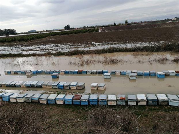 15 Bin Arı Kovanı Sular Altında Kaldı