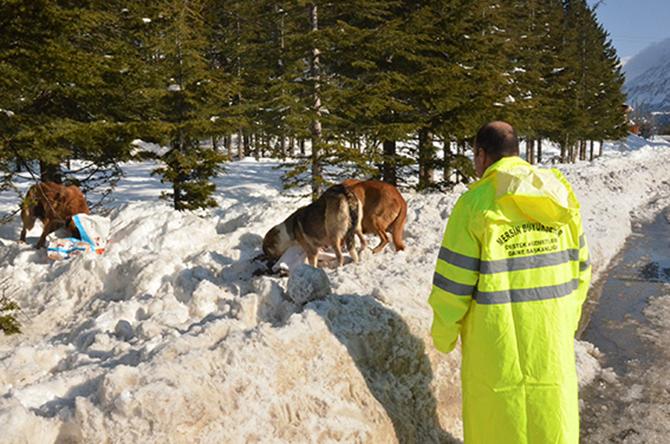 Büyükşehir, Tarsus'ta Yaban Hayvanları İçin Doğaya Yem Bıraktı