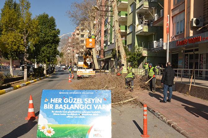 Büyükşehir, Tarsus'ta Kış Budamalarına Devam Ediyor