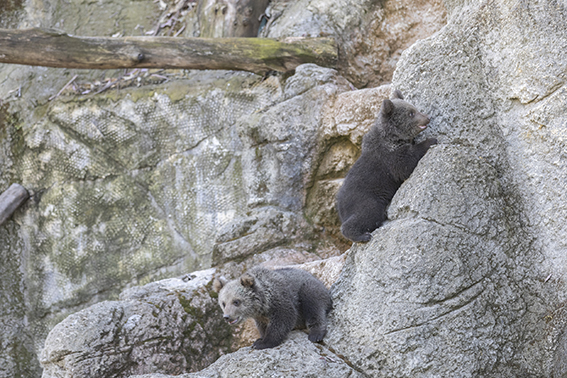 İki Minik Ayı Tarsus Doğa  Parkının Maskotu Oldu