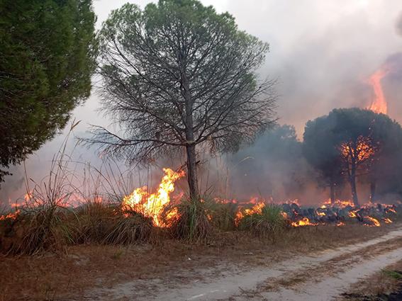 Tarsus'ta 3 Hektar Orman Alanı Yandı